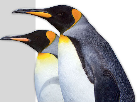 penguin sites